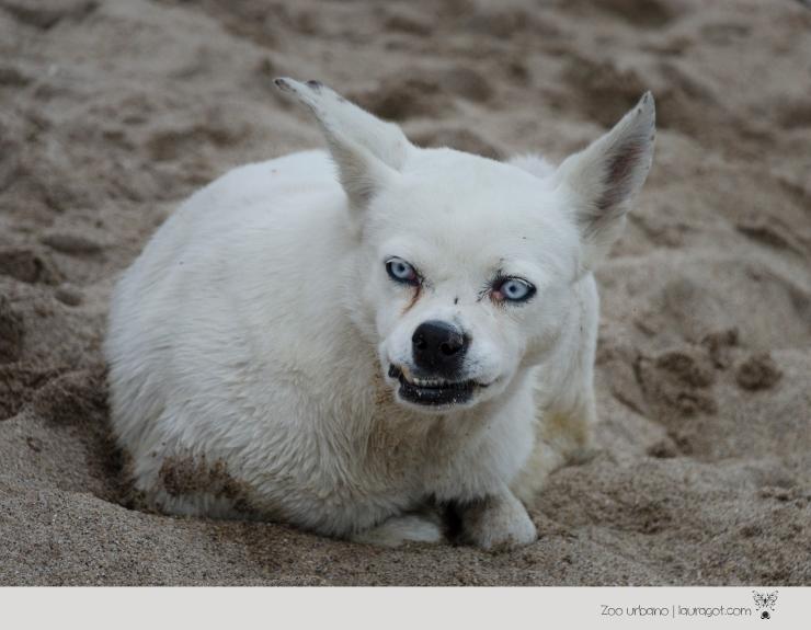 _DSC2210perro en la playa